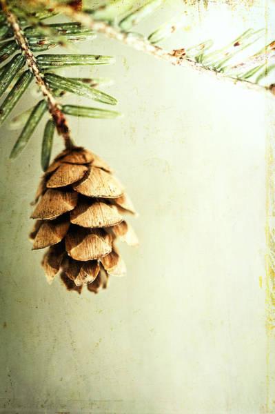 Wall Art - Photograph - The Hush Of Winter by Carolyn Cochrane