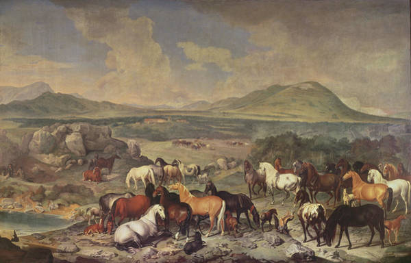 Mare Photograph - The Imperial Stud With Lipizzaner Horses by Johann Georg Hamilton