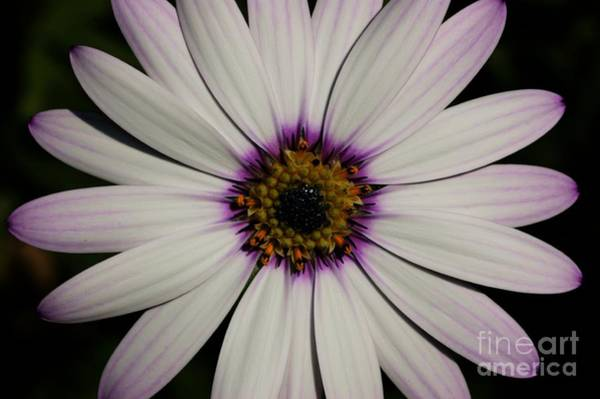 Photograph - The Inner Circle by David Birchall