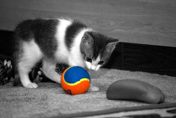 Wall Art - Photograph - The Inquisitive Kitty 06 by Thomas Woolworth