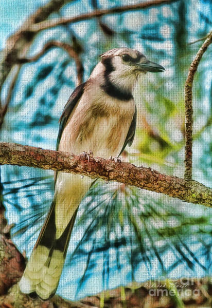 Photograph - The Jay by Deborah Benoit