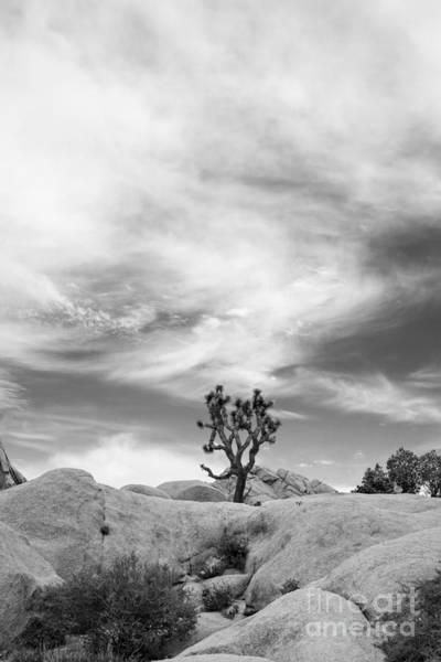 Joshua Tree Photograph - The Joshua Tree by Jennifer Magallon