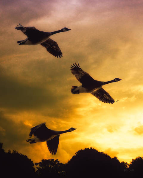 Waterfowl Wall Art - Photograph - The Journey South by Bob Orsillo