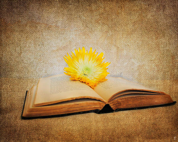 Photograph - The Joy Of Reading by Jai Johnson