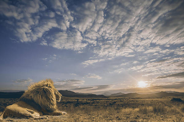 Africa Photograph - The King And His Kingdom by Jackson Carvalho