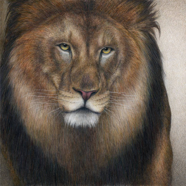 Male Lion Painting - The King Grows Weary  by Pat Erickson