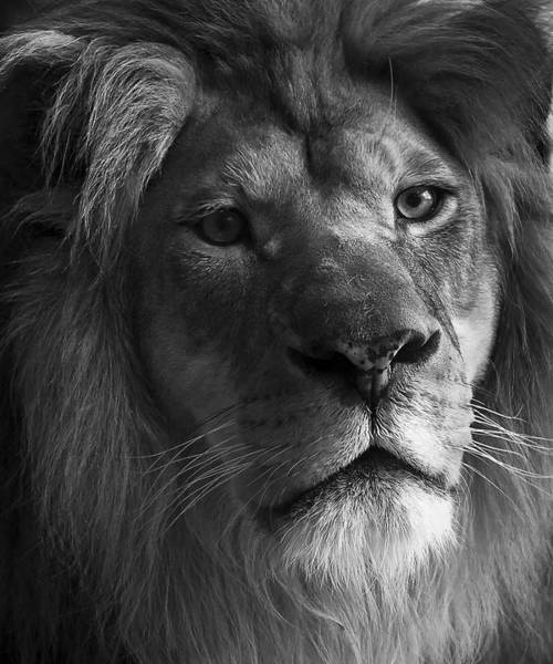 Photograph - The King by Ricky L Jones