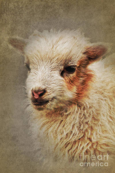 Digital Art - The Lamb by Angela Doelling AD DESIGN Photo and PhotoArt