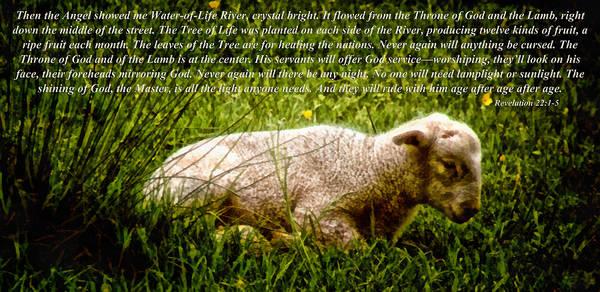 Mixed Media - The Lamb Revelation 22 by Angelina Tamez
