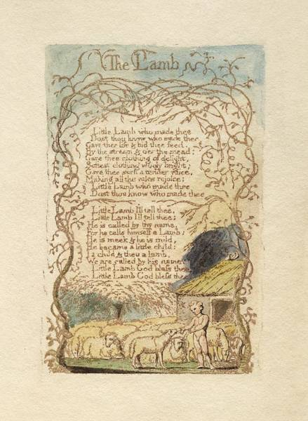 William Blake Drawing - The Lamb by Celestial Images