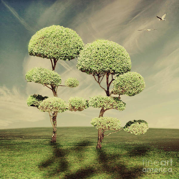 Wall Art - Photograph - The Land Of The Lollipop Trees by Linda Lees
