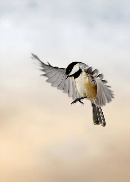 Chickadees Photograph - The Landing by Bill Wakeley