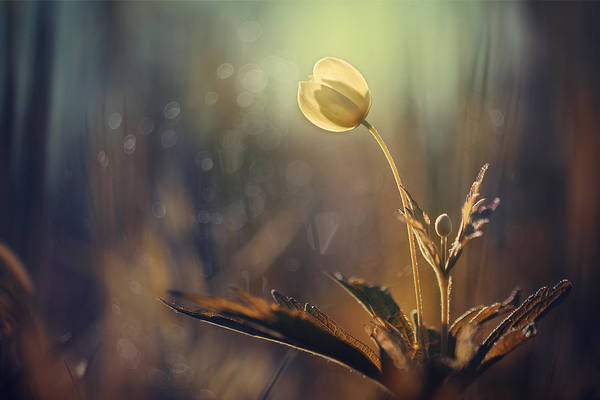 Wall Art - Photograph - The Last Light by Magda  Bognar