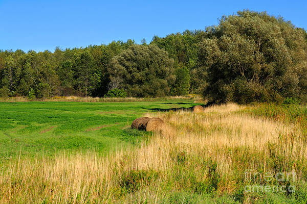 Southern Ontario Photograph - The Last Of Summer by Louise Heusinkveld