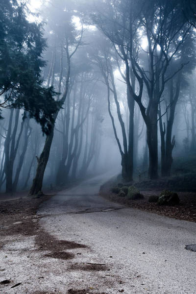 Sintra Photograph - The Last Road by Jorge Maia