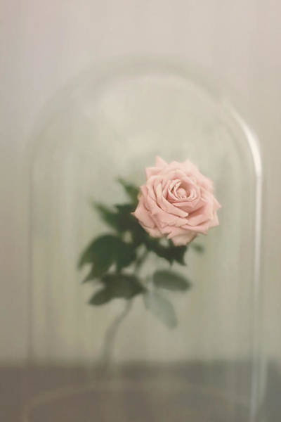 Wall Art - Photograph - The Last Rose by Trish Mistric
