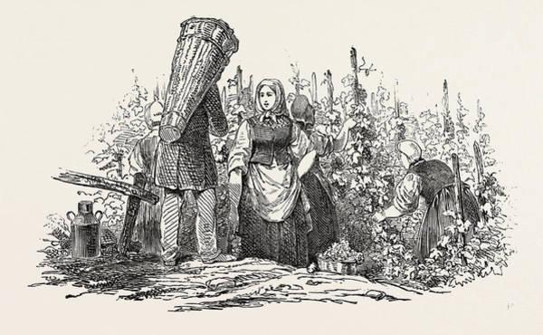 Grape Drawing - The Liebfrau Vintage by English School