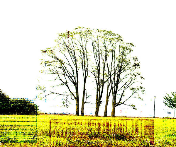 Barcode Digital Art - The Life Of Trees - Nature by Marie Jamieson