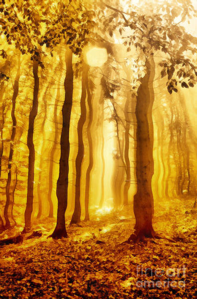 Ancient Woodland Painting - The Light Forest Paint by Odon Czintos