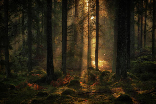 Morning Light Wall Art - Photograph - The Light In The Forest by Allan Wallberg