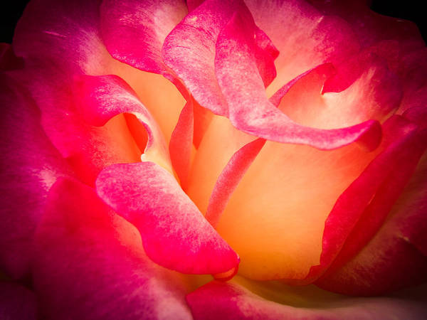 Photograph - The Light Within by Roxy Hurtubise