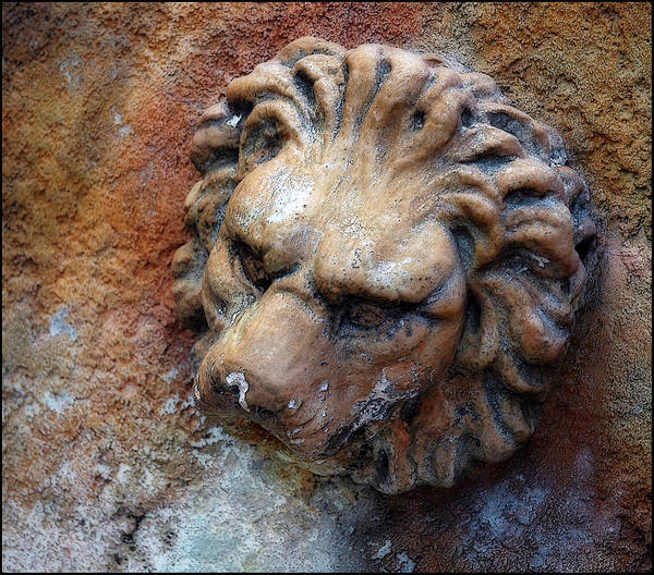 Photograph - Lion's Face In Stone by Ginger Wakem