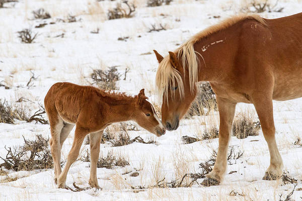 Foal Photograph - The Little One by Sandy Sisti