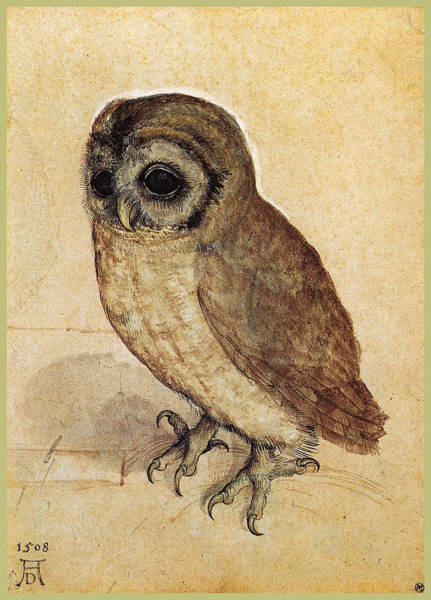 Albrecht Durer Wall Art - Painting - The Little Owl 1508 by Philip Ralley