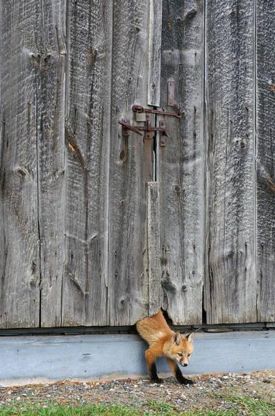 Sneak Photograph - The Little Sneak by Bill Morgenstern