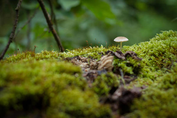 Photograph - The Little Things by Andreas Levi