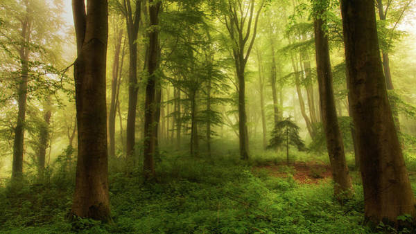 Woods Photograph - The Little Tree by Leif L?ndal