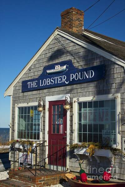 Photograph - The Lobster Pound by Amazing Jules