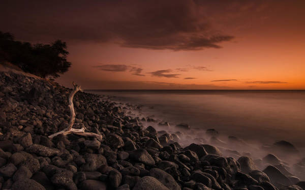 Wall Art - Photograph - The Log And The Beach by Tin Lung Chao