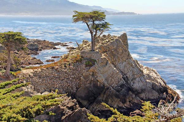 Monterey Cypress Photograph - The Lone Cypress by Jack Schultz