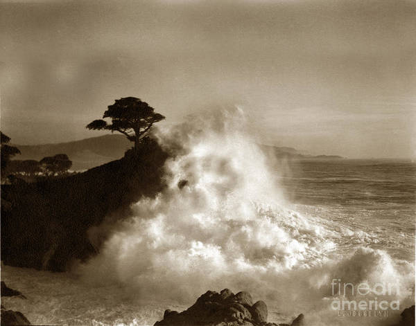 Photograph - The Lone Cypress Midway Point Pebble Beach  Lewis Josselyn  Circa 1916  by California Views Archives Mr Pat Hathaway Archives