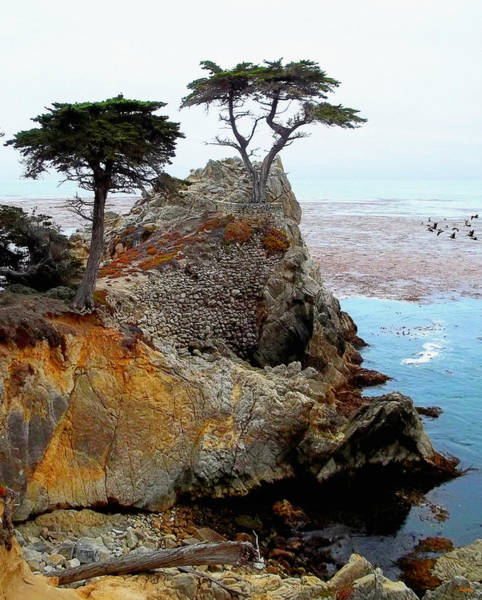 Photograph - The Lone Cypress - Pebble Beach by Glenn McCarthy Art and Photography