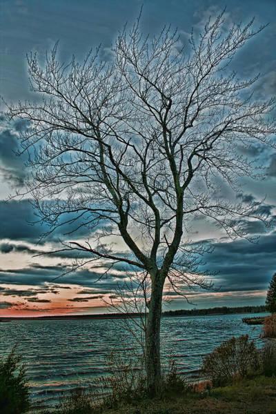 Digital Art - The Lonely Tree by Kristia Adams