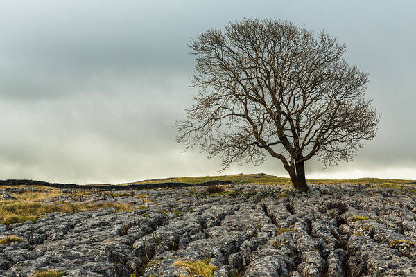 Photograph - The Lonely Tree by Susan Leonard