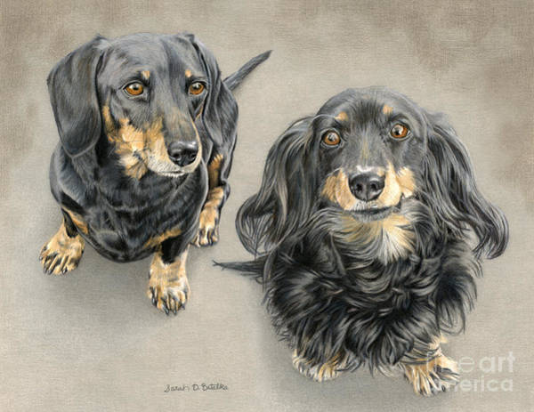 Colored Pencil Drawings Painting - The Long And Short Of It by Sarah Batalka