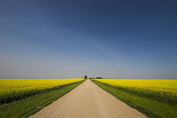 Photograph - The Long Road by Windy Corduroy