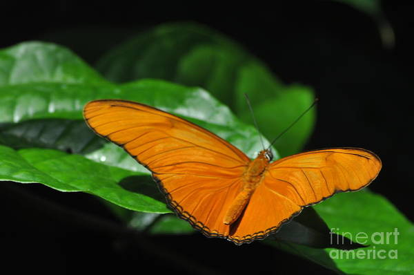 Wall Art - Photograph - The Long Wing by Ginger Harris