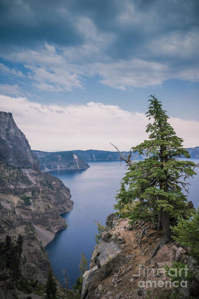 Photograph - The Lookout by Carrie Cole