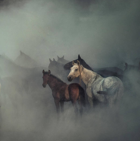 Wall Art - Photograph - The Lost Horses by H??seyin Ta??k??n