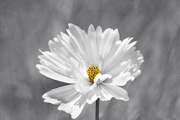 Photograph - The Love Flower by Kim Hojnacki