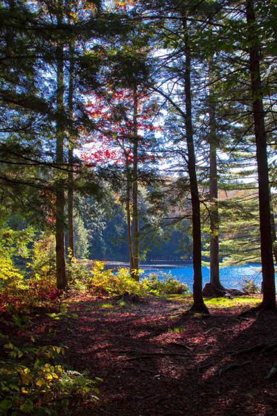 Photograph - The Love Of Autumn And Cary Lake by David Patterson