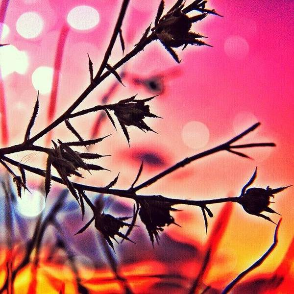 Photograph - The Lovely Weeds by Brandi Suarez