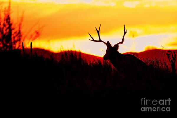 Photograph - The Luminary by Jim Garrison