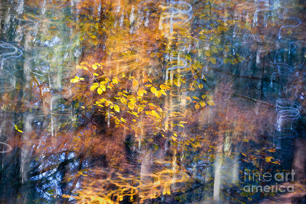 Wall Art - Photograph - The Magic Of A Forest by Yuri San