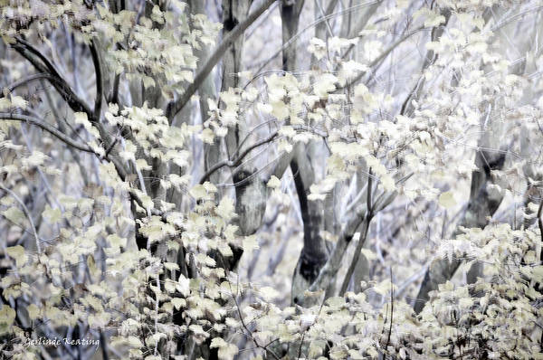 Photograph - The Magic Of Spring by Gerlinde Keating - Galleria GK Keating Associates Inc