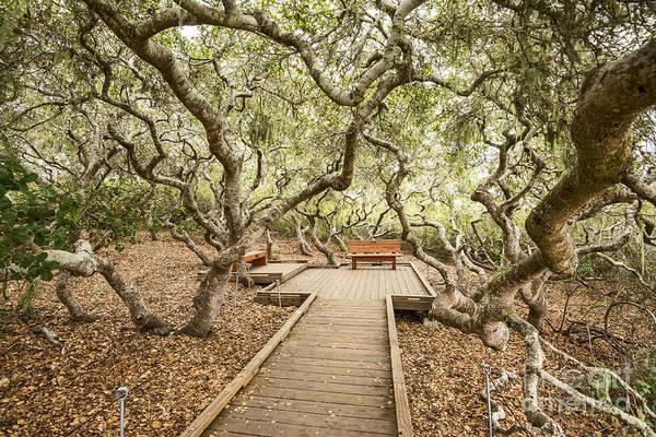 Coast Live Oak Photograph - The Magical El Moro Elfin Forest. by Jamie Pham